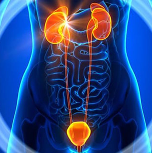 Urology & Andrology Treatment In India