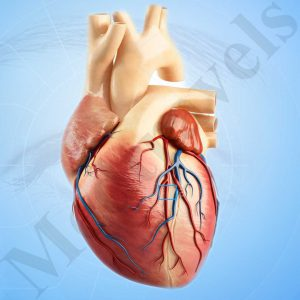 https://www.medtravels.in/cardiology